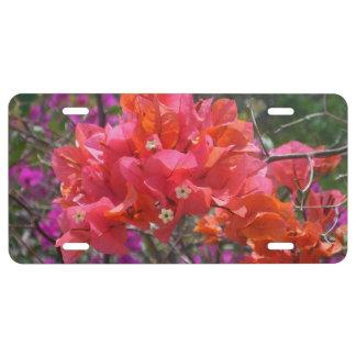 Tropisches rosa Bouganvilla US Nummernschild