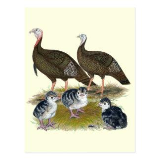 Truthahn-östliche wilde Familie Postkarte