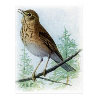 Tuch-unterstützte Drossel Postkarte