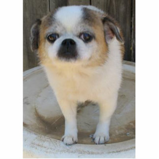 Tuckern-Hund Fotofiguren