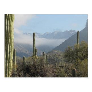 Tucson-Wüsten-Postkarte Postkarte