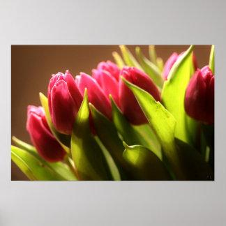 Tulips Plakate