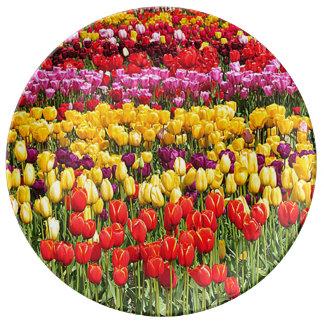 Tulpe-Feld Porzellanteller