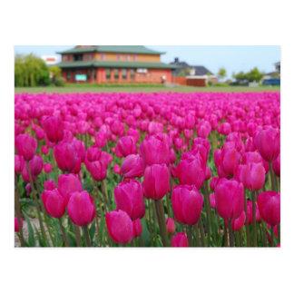 Tulpe-Feld Postkarte