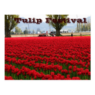 Tulpe-Festival Postkarte