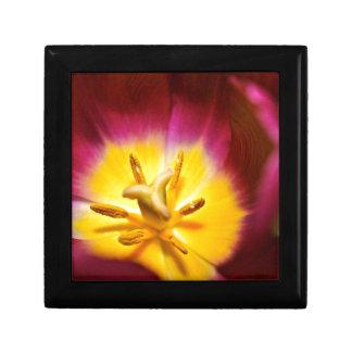 Tulpe-Nahaufnahme Geschenkbox