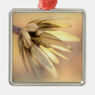 Tulpe-Pappel-leere Samen-Hülse Silbernes Ornament
