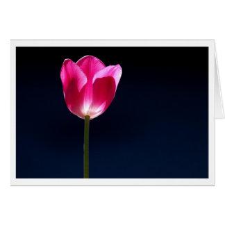 Tulpe-Solo Karte