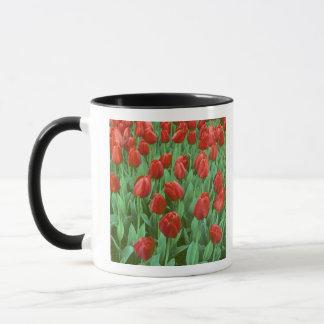 Tulpefeldblüte im Früjahr. Tasse