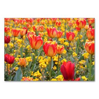 Tulpen, helles und buntes Gelbes und Rot Karte