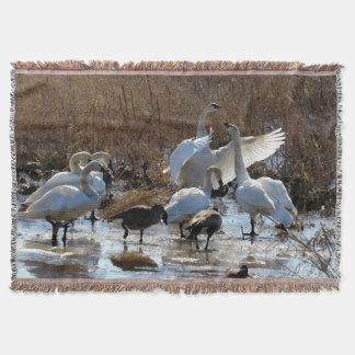 Tundra-Schwan-Vogel-Tier-Tier-Fotografie Decke