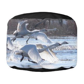 Tundra-Schwan-Vogel-Tier-Tier-Puff-Osmane Hocker