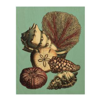 Türkis-Muschel und rote Korallen-Sammlung Holzdruck