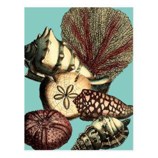 Türkis-Muschel und rote Korallen-Sammlung Postkarte