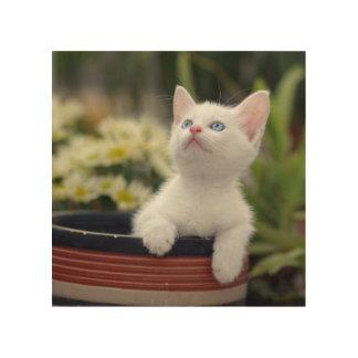 Türkisches weißes Kätzchen Holzleinwand