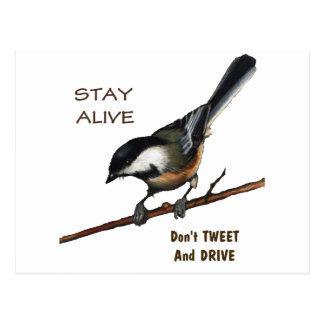 Tweeten Sie nicht u. fahren Sie: Vogel: Postkarte