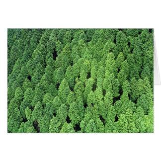 Über dem Wald Karte