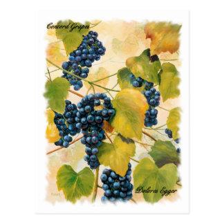Übereinstimmungs-Trauben-Postkarte Postkarte