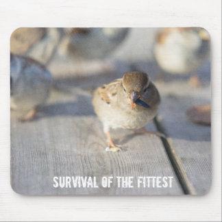 Überleben vom geeignetsten mousepad