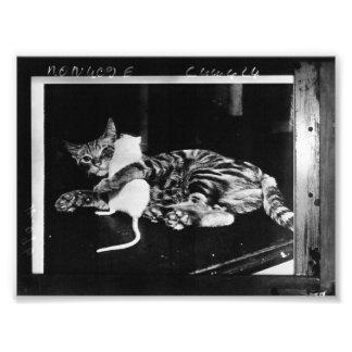 Überraschende Freundschaft - Katze Minnie und Kunst Foto