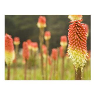Ufer-Morgen-botanische Gärten nahe gurrt Bucht Postkarte