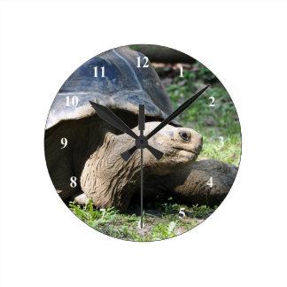 Uhr der Schildkröten-586