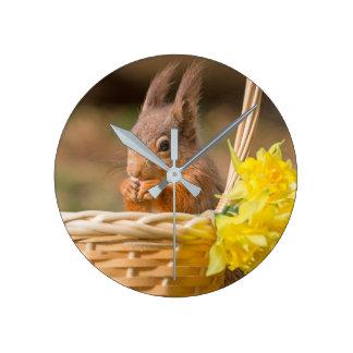 Uhr des roten Eichhörnchens