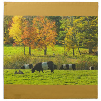 Umgeschnallte Galloway-Kühe auf Rockport Maine Serviette