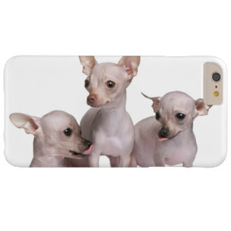Unbehaarte Chihuahua (5 und 7 Monate alte) Barely There iPhone 6 Plus Hülle