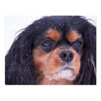 Unbekümmerter König Charles With Snowflakes Postkarte