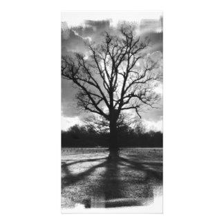 Unfruchtbarer Niederlassungs-Baum Photokarten