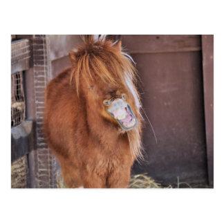 Unglaublich witzig Horsey Postkarten