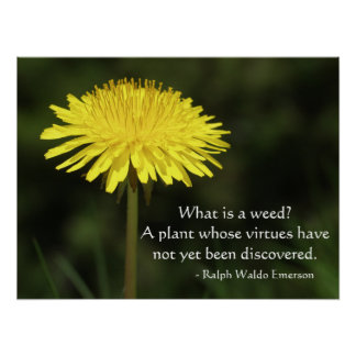 Unkraut-Zitat von Ralph Waldo Emerson Poster