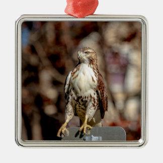 Unreifes Rot angebundener Falke Silbernes Ornament