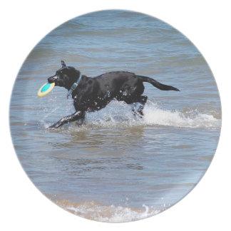 Unser schwarzes Labrador, das Frisbee vom See Melaminteller