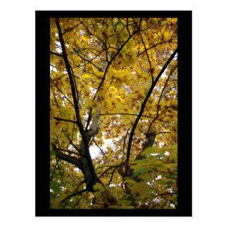 Unterseite des Gelb-Blätter im Fall-Minidruck Postkarte