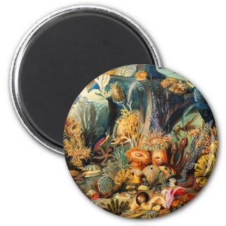 Unterwasser Runder Magnet 5,7 Cm