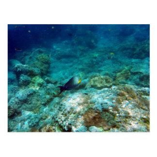 Unterwasseransicht-Postkarte Postkarte