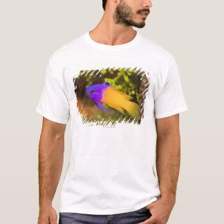 Unterwasserleben, FISCH:  ein bunter feenhafter T-Shirt