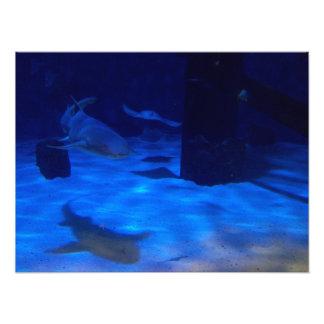UnterwasserStrampler Fotodruck