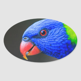 Unverschämt-Regenbogen-Lorikeet-silkenphotography Ovaler Aufkleber