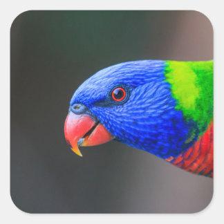 Unverschämt-Regenbogen-Lorikeet-silkenphotography Quadratischer Aufkleber