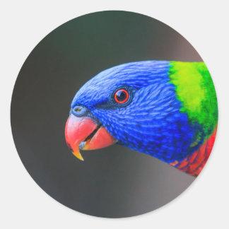 Unverschämt-Regenbogen-Lorikeet-silkenphotography Runder Aufkleber