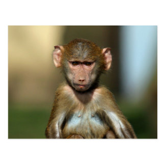 Unverschämter Affe - niedliche Postkarte