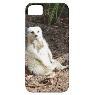 Unverschämtes weißes Meerkat, iPhone 5 Etuis