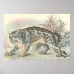 Unze (Schnee-Leopard) Plakate