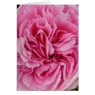Üppige rosa Rose Karte
