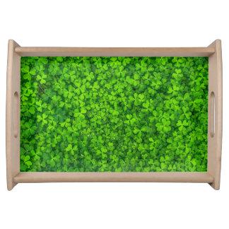 Üppiger grüner Klee mit Wasser-Tropfen Serviertablett