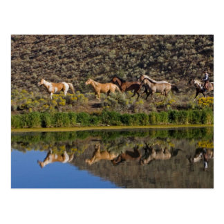 US, Oregon, Seneca, Ranch lebend an den 2 Postkarten