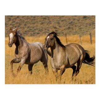 US, Oregon, Seneca, Ranch lebend an Postkarte